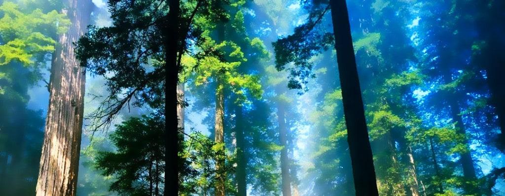alberi-energia