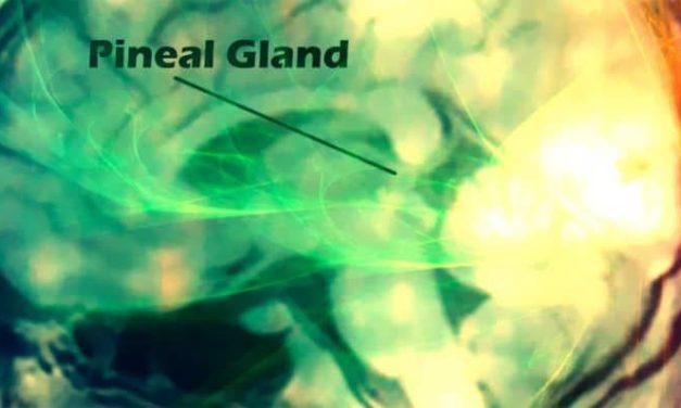 Pineale: un occhio dentro la tua testa