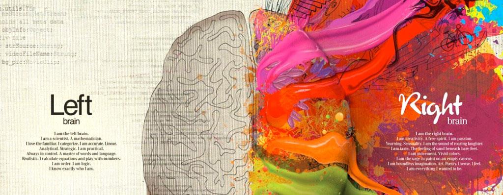 Cervello - Emisferi