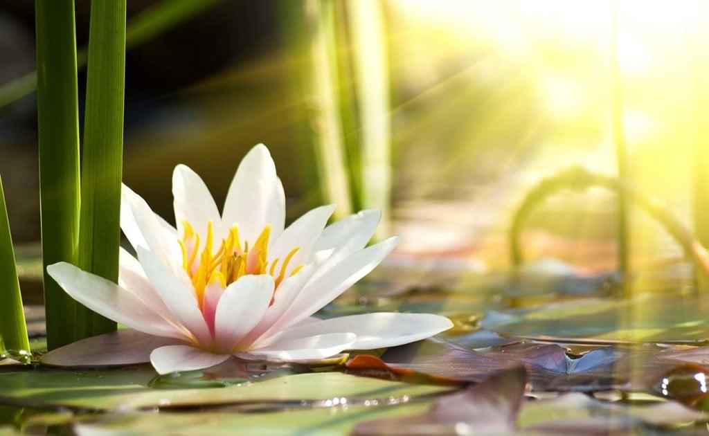 meditazione-coscienza-cosmica-campo-quantico-fisica-quantistica-crescita-spirituale