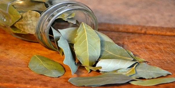 Alleviare ansia e stress con le foglie di alloro