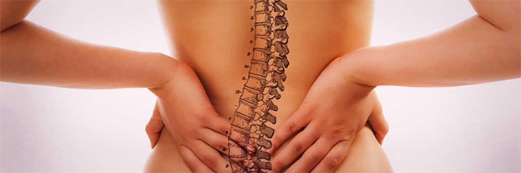 Il senso biologico della colonna vertebrale